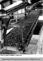 Conveyor Belt Moving Coal at the Binkley Mining Company