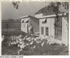 Neimeyer Chicken Farm