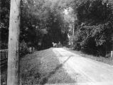 Horse and Buggy on road, 1903 (Bass #888)