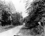 Winding road, woods, 1933 (Bass #227058F)