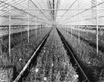 Elder Brothers greenhouse, 1924 (Bass #88429-F)