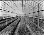 Elder Brothers greenhouse, 1924 (Bass #88431-F)