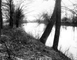 View along Fall Creek, 1911 (Bass #24671)