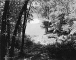 Estate of Nicholas H. Noyes, lake and trees, 1935 (Bass #231622-F)