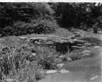 Estate of Nicholas H. Noyes, stream and lillies, 1931 (Bass #2212313-F)