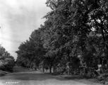 Estate of Nicholas H. Noyes, roadway, 1935 (Bass #231703-F)