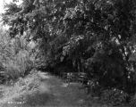 Estate of Nicholas H. Noyes, trees and pathway, 1935 (Bass #231708-F)
