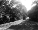 Riverside Park, road through woods, 1920 (Bass #71742-F)
