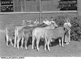 1st Prize Delaware County Brown Swiss 4-H Group at the 1947 Indiana State Fair